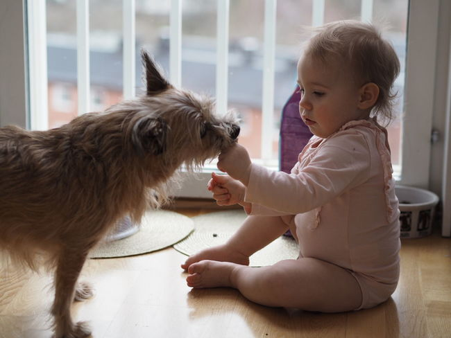Pets Dog Animal Indoors  Cute People Childhood One Animal Domestic Animals Playing One Person Animal Themes Happiness Friendship