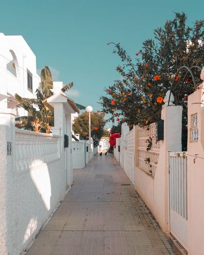 Spain. we have a couple of rooms to let in this neighbourhood. Sea and shops nearby Holidays SPAIN Vacations сдамкомнату Residentialarea отпусквиспании BeachHoliday Summervacation Holidaytown València Summerholidays Beautifulspain Whitebuildings Tree Architecture Sky Building Exterior Built Structure Residential Structure Diminishing Perspective Settlement Empty Road Narrow Alley Passageway Walkway Leading Shadow vanishing point The Way Forward