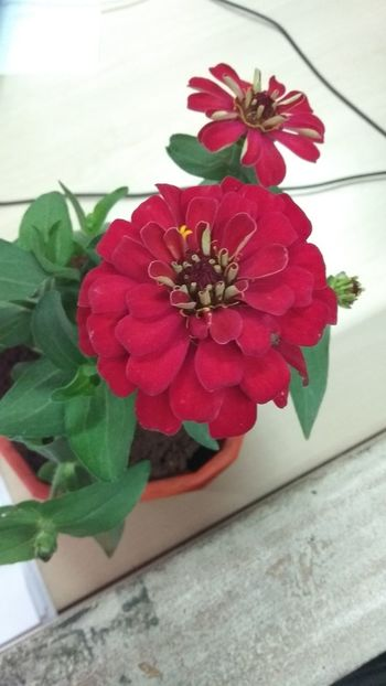 indoor beauty Flower Red Leaf Plant Flower Head Nature No People