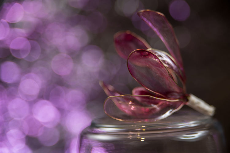 Close-up of pink rose on glass table