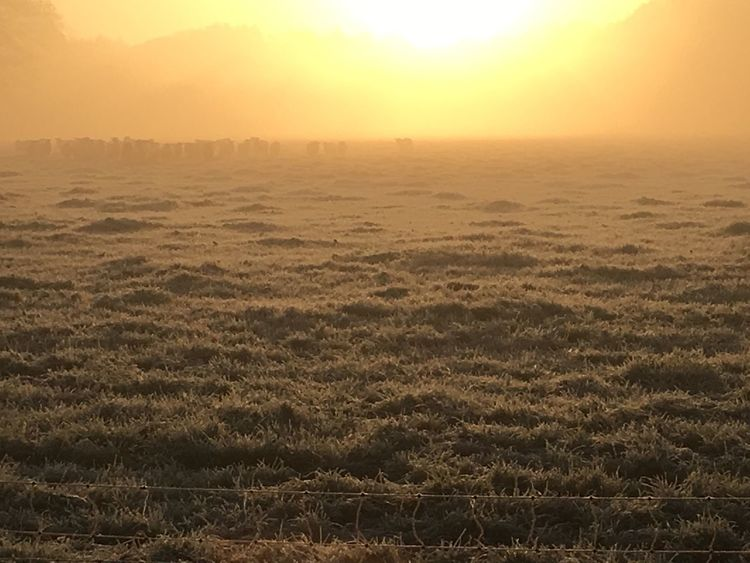 Misty Sunrise Cold And Frosty Nature Tranquility Sunset Tranquil Scene Beauty In Nature Scenics No People Outdoors Landscape Sun Sky Idyllic Grass Growth Day Water