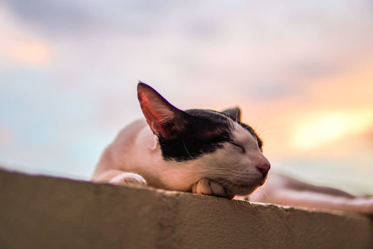 Cat sleeping at sunset