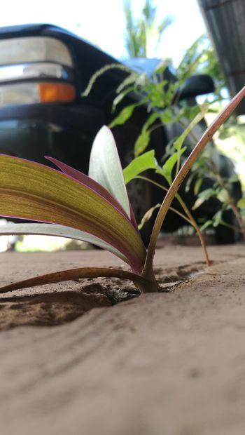 Concrete Jungle Concrete Wall Concrete Floor Concrete Life Plant Life Plant Plants Sand Close-up Animal Themes Plant