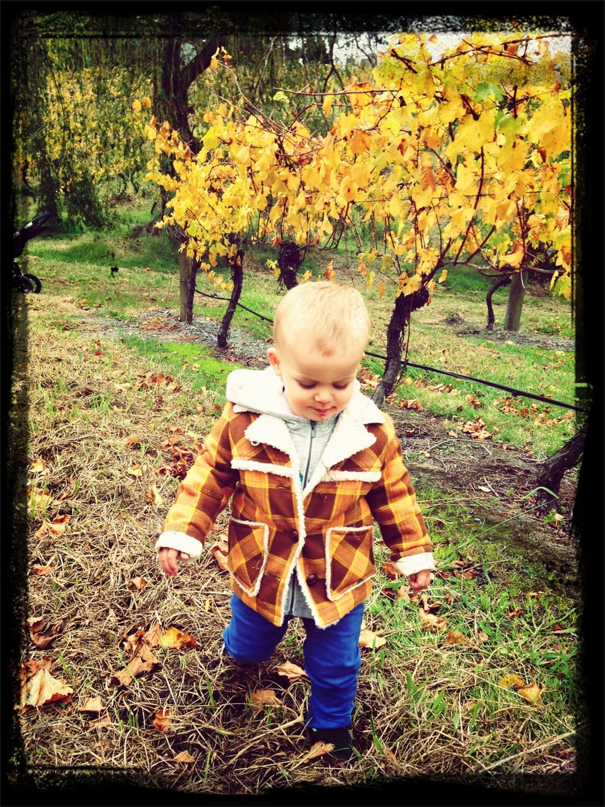 childhood, elementary age, lifestyles, leisure activity, girls, boys, casual clothing, tree, transfer print, park - man made space, person, innocence, field, autumn, growth, rear view, cute