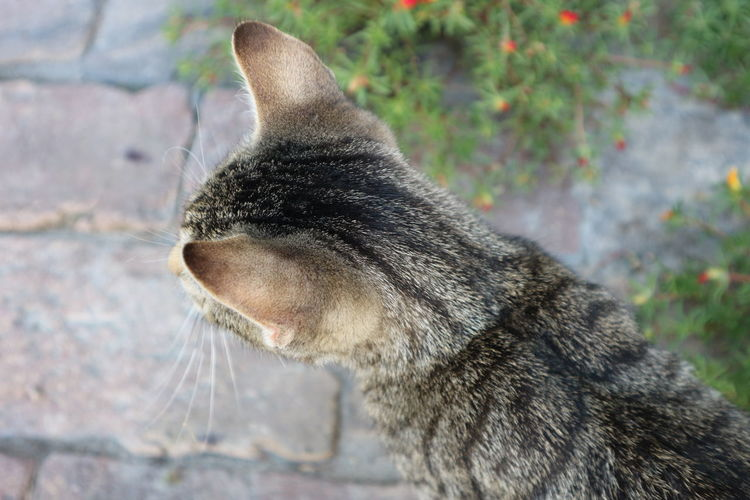 Rear view of cat standing on footpath