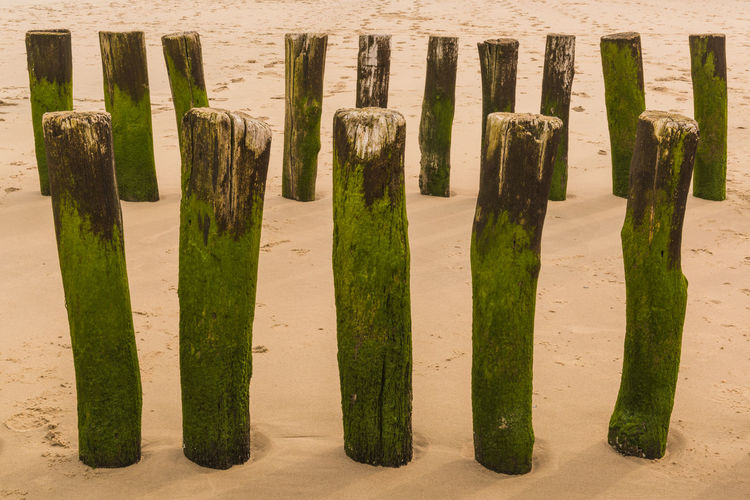 Mossy wooden posts at beach