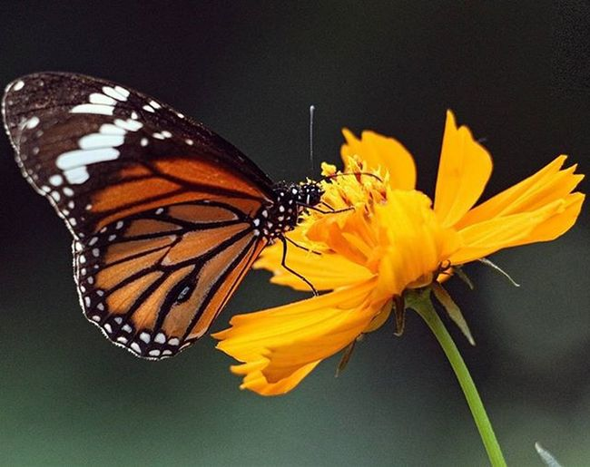 Everyone is like a butterfly, They start out ugly and awkward And then morph into beautiful graceful butterflies That everyone loves. Butterfly Random Patnazoo Travelingram