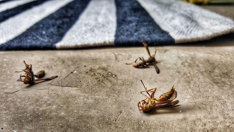 not today. Wasp Balcony New Apartment Yellow Jacket Stinger Beach Arthropod Colony Wildlife Animal Antenna