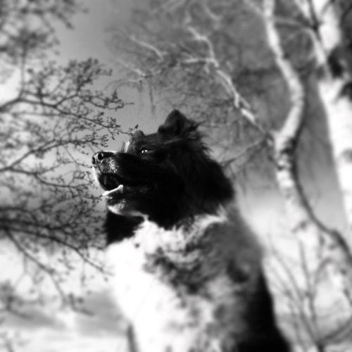 Animal Themes One Animal Mammal Tree Dog Low Angle View No People Domestic Animals Pets Outdoors Close-up Blackandwhite Blackandwhite Photography