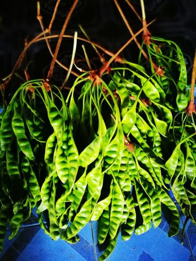 High angle view of green leaves on potted plant