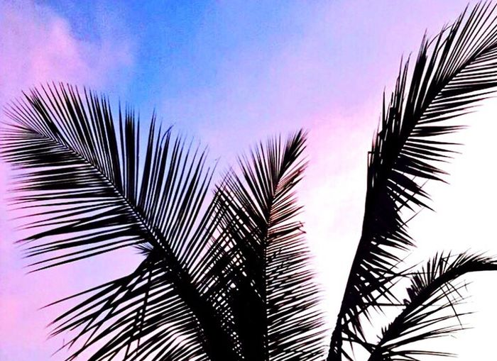 Palm Tree Palm Leaf Low Angle View Sky Palm Frond Beauty In Nature Outdoors Day Beach The Great Outdoors - 2017 EyeEm Awards