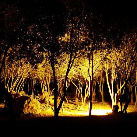 Damanekoh Pakistan Jungle Night Trees Peersohawa