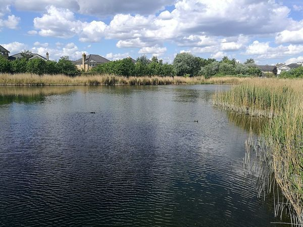 Tranquility Tranquil Scene Outdoors Day Water Cloud - Sky Nature Reflection Sky Sky Reflection Pond Sky Reflected In Water Nature Photography Lake Wetland Centre Wetlands Sky Clouds Sunny Day Nature Reserve Wetlands Smartphonephotography Rural Scene Wetland Wildlife Wetland Landscape London Spring 2017