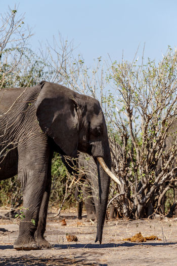 Side view of elephant on land against sky