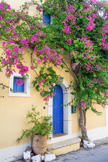 Famous house in Assos, Kefalonia, Ionian Islands, Greece Assos Beautiful Blossom Blue Bougainvillea Colorful Cultures Door Europe Exterior Flower Greece Greek House Ionian Islands Kefalonia Mediterranean  Pink Color Scenery Street Summer Touristic Travel Destinations Vacations Village EyeEmNewHere The Architect - 2017 EyeEm Awards The Great Outdoors - 2017 EyeEm Awards Sommergefühle Been There.