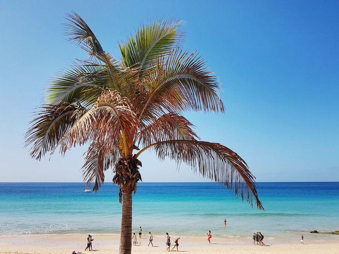 Tree Water Palm Tree Sea Beach Clear Sky Sand Blue Summer Tropical Climate Tropical Tree Palm Leaf Island Caribbean Coastline
