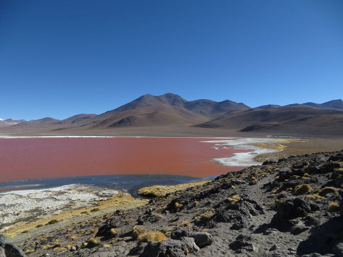 Scenic view of laguna colorada by mountains against clear blue sky