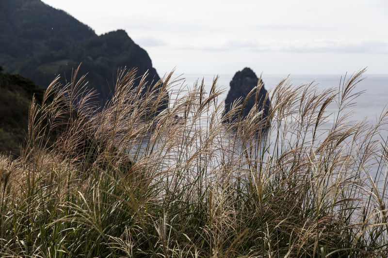 Ulleungdo is the most mysterious island. It is located at East Sea of South Korea. I have been there for 13 days for photo travel. Beauty In Nature Day Focus On Foreground Grass Growth Gwaneumdo In Front Of Island Mountain Nature Non-urban Scene Outdoors Plant Reed Scenics Sea Seascape Seaside Sky Tall Grass Tranquil Scene Tranquility Ulleungdo Uncultivated Water