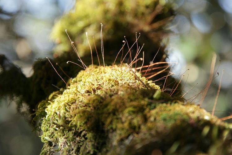 Close-up Nature Beauty In Nature Nature_perfection Growth India Travelphotography Moss Close Up Moss In Macro Mossy Wood Mossporn Moss Plant Outdoors No People Nature_collection Naturephotography