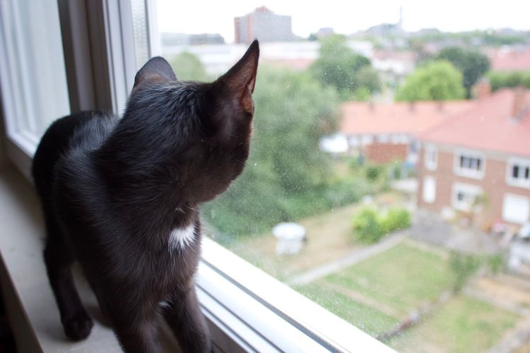 Cat Cats Of EyeEm Black Kitten Black Cat Staring At The World Staring Window Appartment View Domestic Animal Pets One Animal No People Day Domestic Animals Curious Sad Animal Themes Domestic Cat Looking Looking Through Window