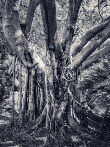 Natura in abito da sera Sicilia Siciliabedda Palermo Villa Malfitano Fondazione Withaker Full Frame Backgrounds Close-up First Eyeem Photo