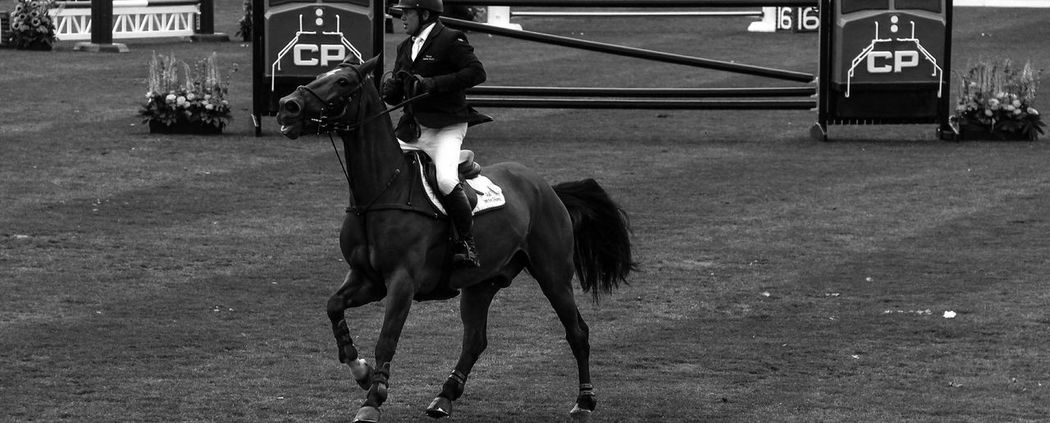 Horse Jumping Black And White