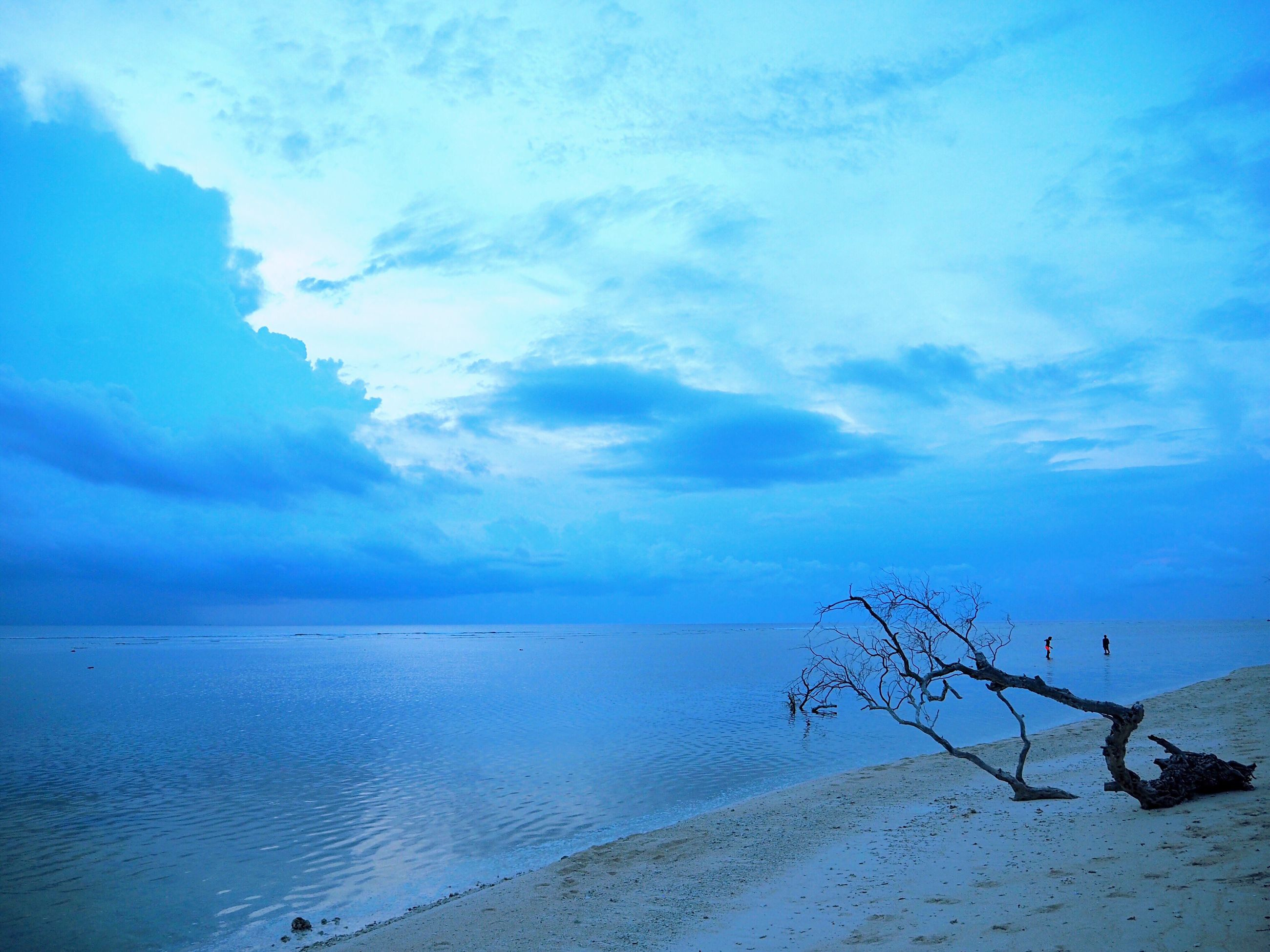 sea, sky, nature, horizon over water, water, beauty in nature, beach, blue, cloud - sky, tranquility, scenics, no people, tranquil scene, outdoors, tree, bird, day