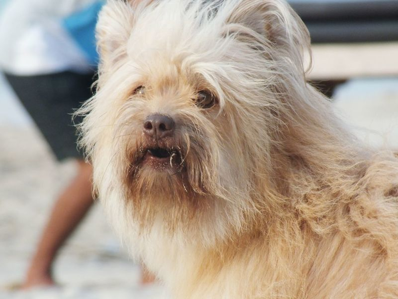 Walking by with Ovo Dog Pets One Animal Animal Animal Hair Portrait Looking At Camera Animal Themes Mammal Domestic Animals Day Close-up Water Outdoors No People