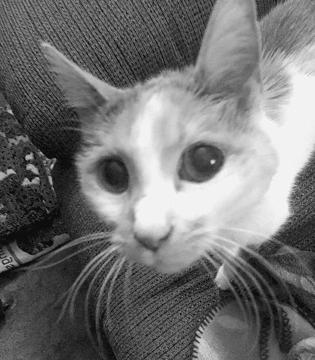 Yes, Another LiliBug Pic MyLilibug Bnw Cute Pets Pet Photography