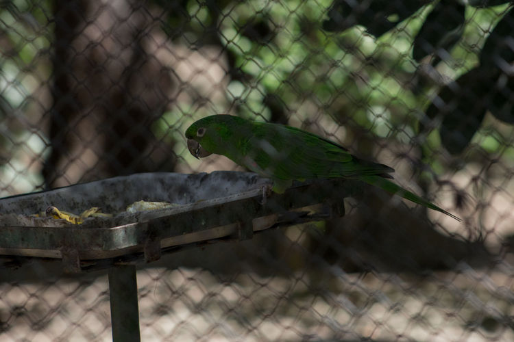 Animal Themes Animals In The Wild Avian Beak Bird Close-up Fence Focus On Foreground No People One Animal Outdoors Perching Profile Tranquility Wildlife Zoology