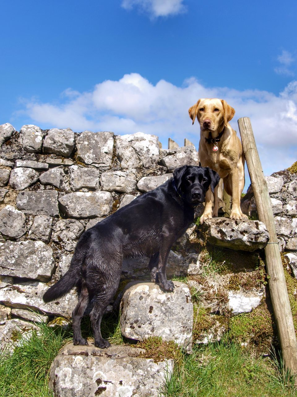 Dogs Standing On Rock