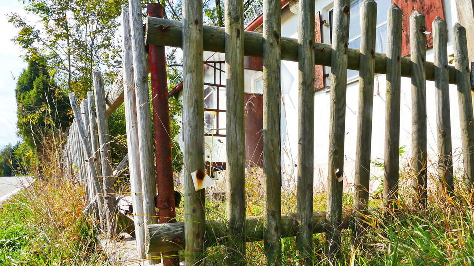 A New Beginning Barrier Border Fence Plant Day Nature Wood Material Protection Security Field Outside Quiet Moments Tree Sunlight Paling Wooden Posts Garden Fence Lumix Fz1000 Old Fences Expire Rotten Fence Broken Fence