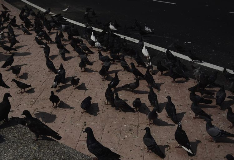 Low section of birds on cobblestone