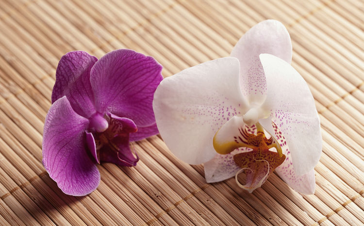orchid blossoms Asian Culture Bamboo Bamboo Background Blooming Flower Head Growth Leaf Nature Orchid Orchid Blossoms Orchid Flower Orchidee Orchids Pink Color Relaxing Still Life Wellness White