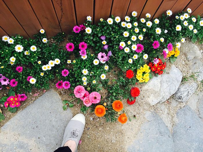 Flowers Flower Check This Out Hi! Relaxing Taking Photos Enjoying Life Hello World Iphonephotography Shoes Shoe Foot IPhone Iphonography IPhoneography Daily ByAlex