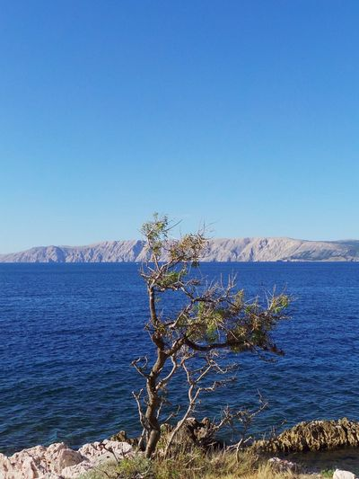 Croatia Beauty In Nature Blue Clear Sky Copy Space Day Foreground Mountain Mountain Range Nature No People Novi Vinodolski Outdoors Plant Scenics Sea Sky Tranquil Scene Tranquility Tree Water An Eye For Travel