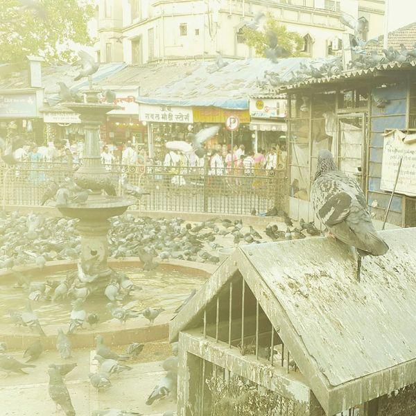 Birds Piegon Samsung Galaxy S5 Photography Mumbai Beingaman
