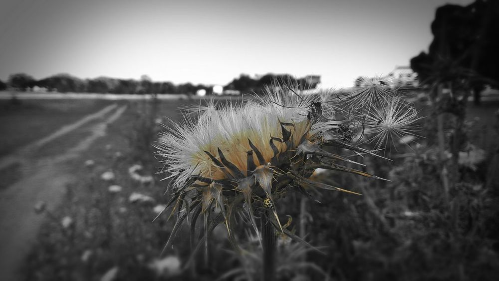 Taking Photos Relaxing Flower Flowers, Nature And Beauty Love Blackandwhite Photography Blackandwhite Ladybug