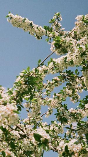 blooms on film