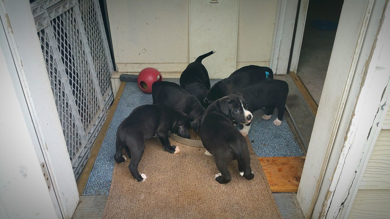 dog, animal themes, pets, domestic animals, mammal, door, no people, indoors, togetherness, sitting, day