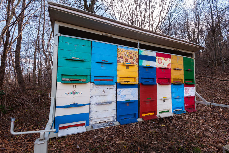 Hives of bees in the apiary. Multi Colored No People Nature Day Land Tree Container Box Field Plant Bare Tree Box - Container Outdoors Wood - Material Mailbox Architecture Built Structure Mail Public Mailbox Communication
