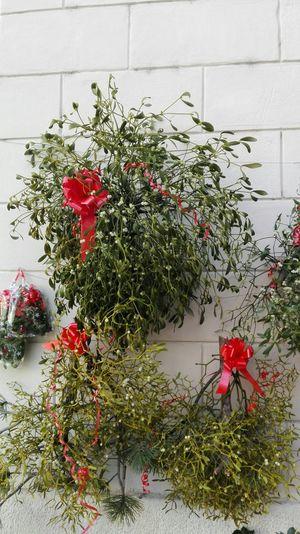 Christmas Around The World Trentino Alto Adige Reality Light Hello World Noel2015