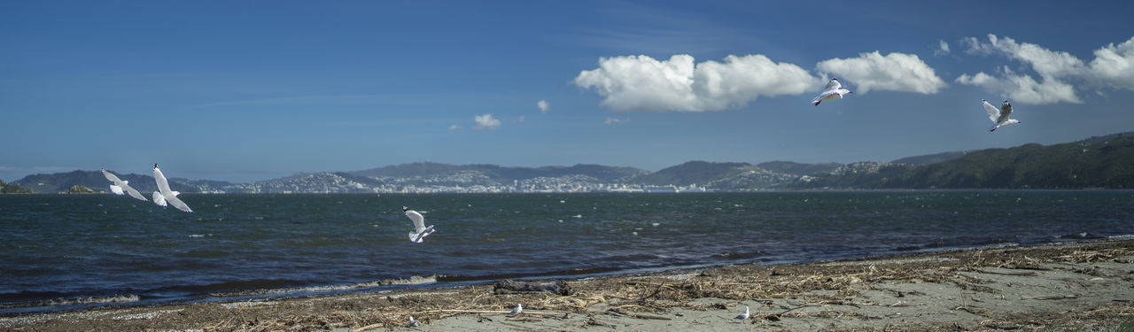 petone seagulls Animal Themes Animal Wildlife Animals In The Wild Beach Beauty In Nature Bird Day Flying Mammal Mid-air Motion Mountain Nature No People One Animal Outdoors Scenics Sea Seagull Sky Spread Wings Swan Swimming Water