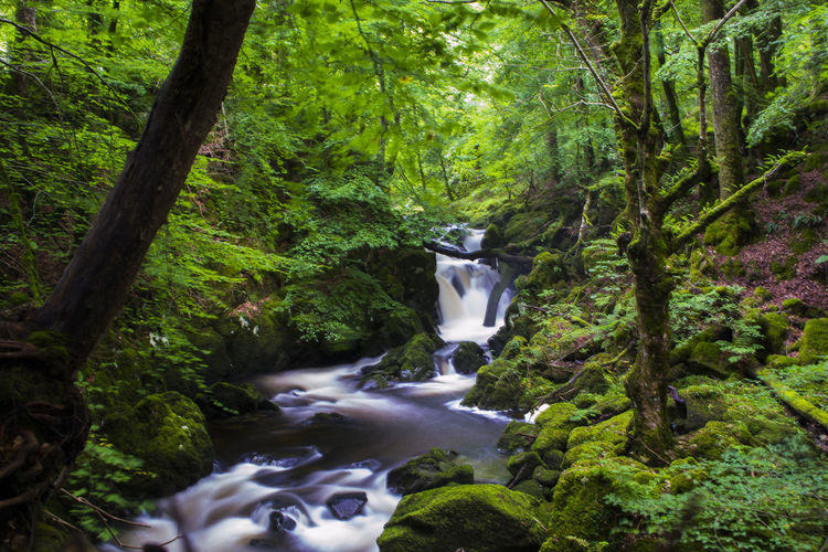 Dolgellau Snowdonia Waterfall Breathing Space Beauty In Nature Blurred Motion Branch Day Flowing Water Forest Green Color Growth Long Exposure Lush Foliage Moss Motion Nature No People Outdoors Plant Scenics Tree Water Waterfall