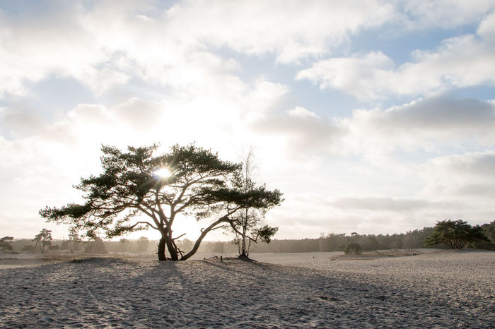 Nature Tree Landscape Wilderness Sand Sundown Backlight Backlight And Shadows Soesterduinen Soesterberg
