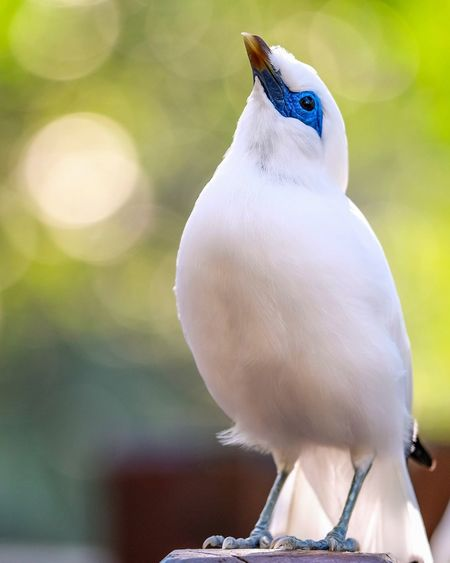 Bird Photography Birds_collection Birds Of EyeEm  Bird Vertebrate Focus On Foreground Animal Wildlife One Animal Animals In The Wild Nature Beauty In Nature Cute Outdoors Close-up