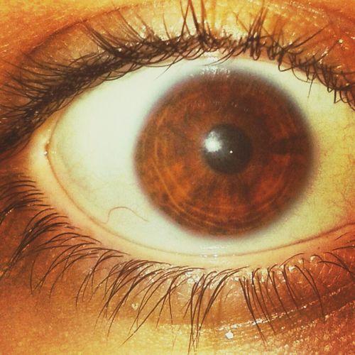 Eye Me Brown