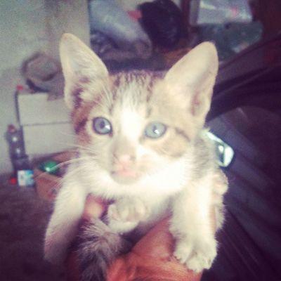 Olha o que apareceu aqui na garagem de casa! Rsrs Cat Discovery Cool Animal happy garage