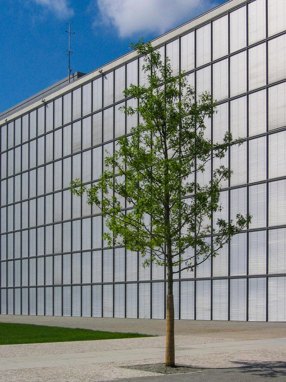 Tree Growing Against Modern Building
