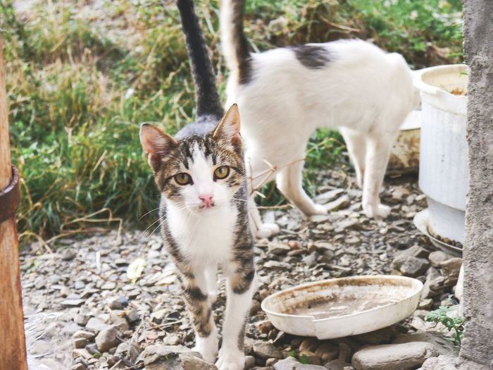 Animal Themes Animal Mammal Pets Vertebrate Domestic Animals Domestic No People One Animal Day Portrait Nature Looking At Camera Focus On Foreground Cat Domestic Cat Feline Whisker Solid